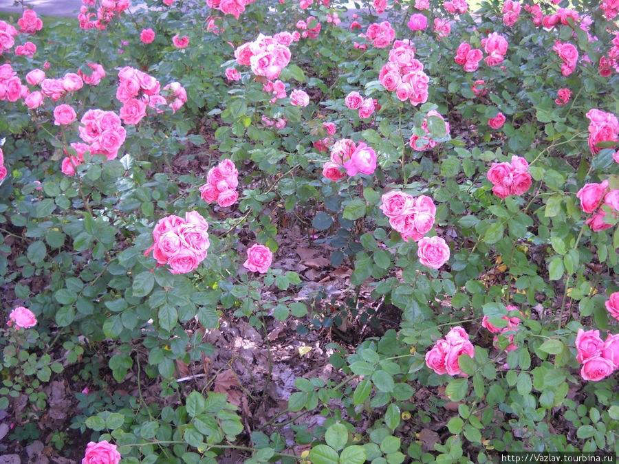 Как хороши, как свежи были розы...