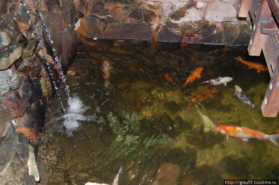 Star Fish Хургада, Египет
