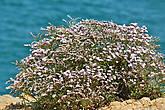 Мы ставили перед собой цель просто погулять на природе и она нас отблагодарила красивыми растениями встреченными по пути...