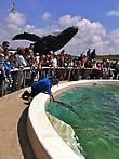 Кормление дельфинов