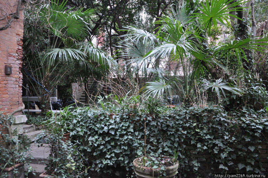 За плюшём уже чужая часть сада.