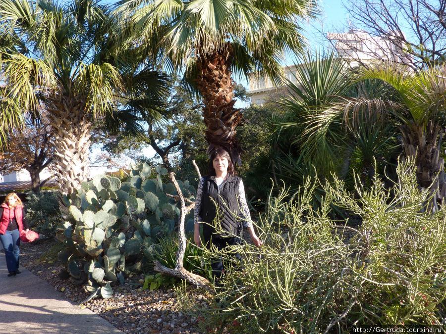 В крепости Аламо прекрасный сад — любимые кактусы.