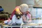 Ветеринар лечит собаку.
