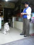 Собачка просит кушать