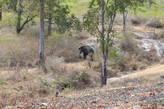 Слонёнок отстал от семьи