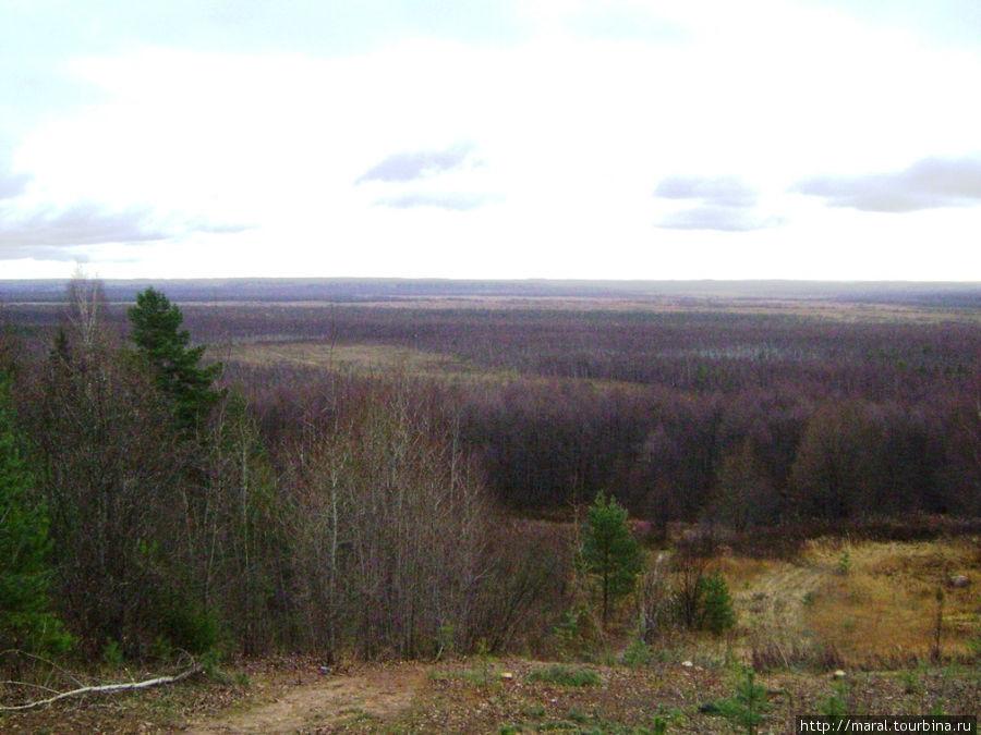 И вывела эта тропа к болоту, которое в народе называют Чистым или иначе — Исуповским
