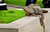… греются на поребриках (простите, бордюрчиках!;) и оградах парковых скульптур…