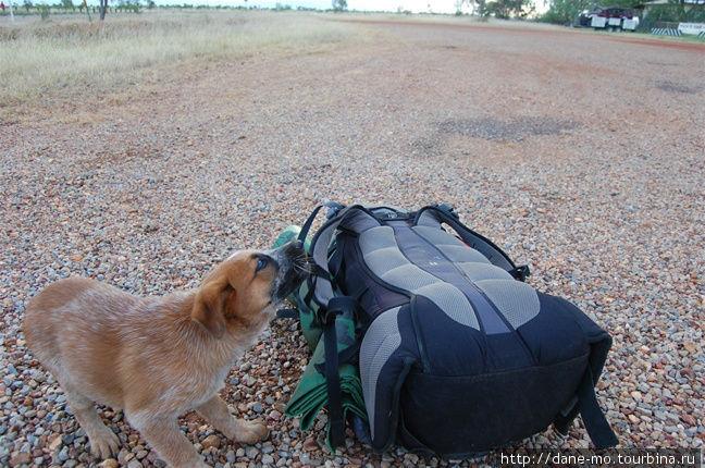 Я привлёк внимание местного щенка, который вышел поиграть со мной. Однако через несколько минут за псом пришёл полицейский и унёс обратно.
