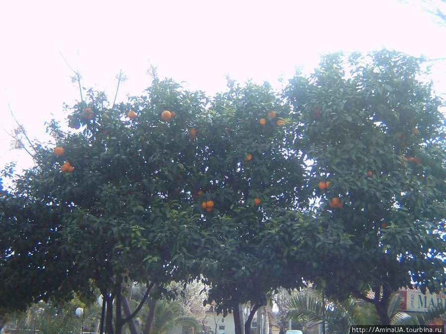 апельсины в феврале