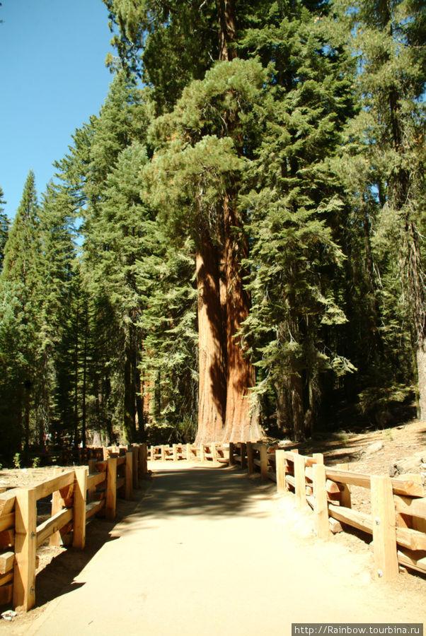 Самые высокие деревья на планете Национальный парк Секвойя, Соединенные Штаты Америки