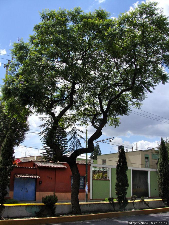 Искривленное дерево придает мистики