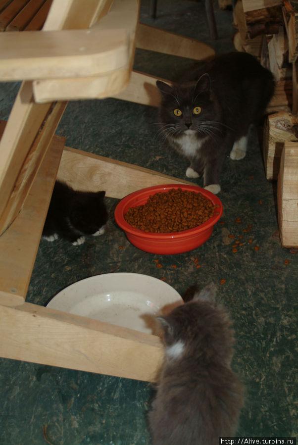 Рядом питалась кошачья семейка, кошка-мама следила, чтобы её дети были сыты.