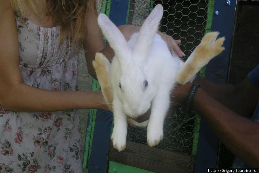 Кроль имеет бежевые лапы