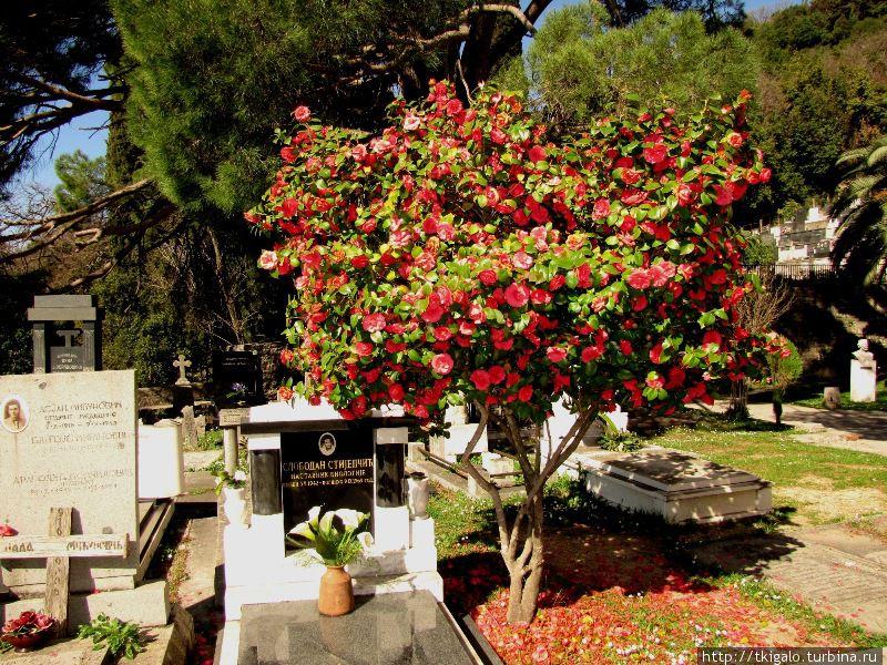 Кладбище при Монастыре Савина.