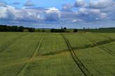 По дороге из Несвижа в Минск снова за окном автобуса мелькают такие типичные для Белоруссии картинки — поля, поля, поля...