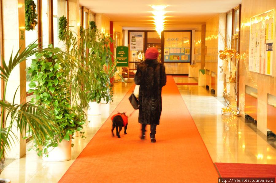 Из корпуса в корпус, в СПА-центр и бассейн, как и в процедурное отделение удобно переходить, даже в зимнее время — пассаж с растениями в кадках, тепло и глазу приятно. К слову, в отеле принимают гостей и с домашними любимцами.