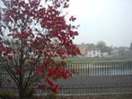Яркие краски на фоне тумана