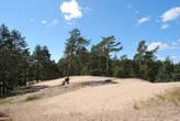 Санаторий находится на берегу Финского залива, места там красивые, но мы не на них пришли любоваться)