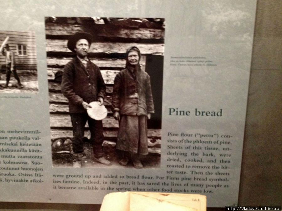Сосновый хлеб