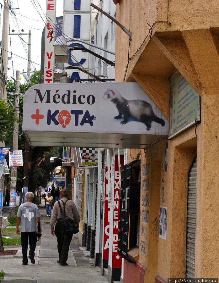 Медик Кота — тут и испанский учить не надо — все понятно :)