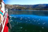 В одной из бухт Чивыркуйского залива Байкал покрылся тончайшей коркой льда. Малькие хрустальные льдинки со звоном разлетались от борта корабля и долго катились по тонкому льду наигрывая свою необычную мелодию.