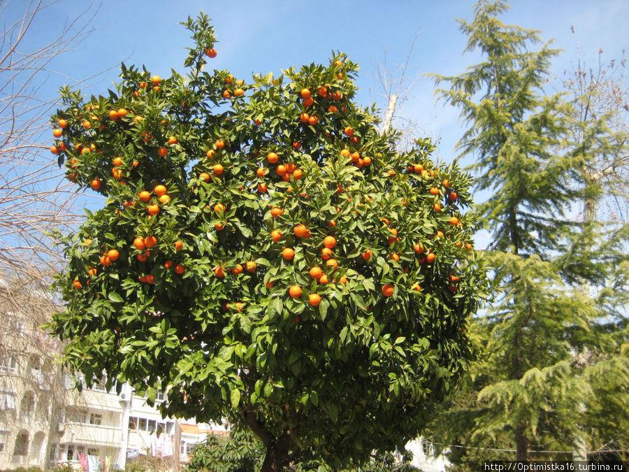 Апелсины очень украшают территорию мечети