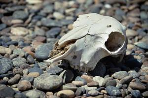 Надеюсь, черепушки и косточки, которые валяются в тех местах по всей округе — не последствия одного из таких поединков…