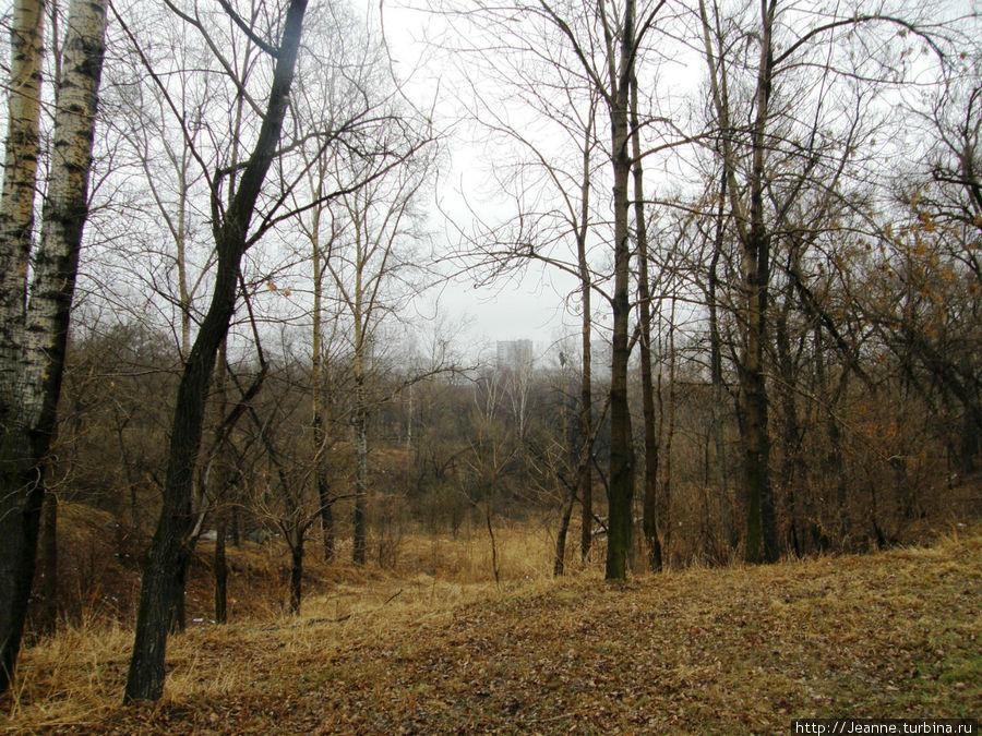 А какой необыкновенный, весенний  воздух  — запах листвы и мокрой травы!