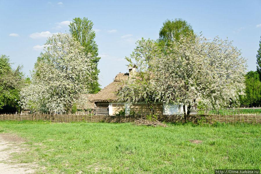 В мае цветёт вишня и другие деревья. Очень красиво