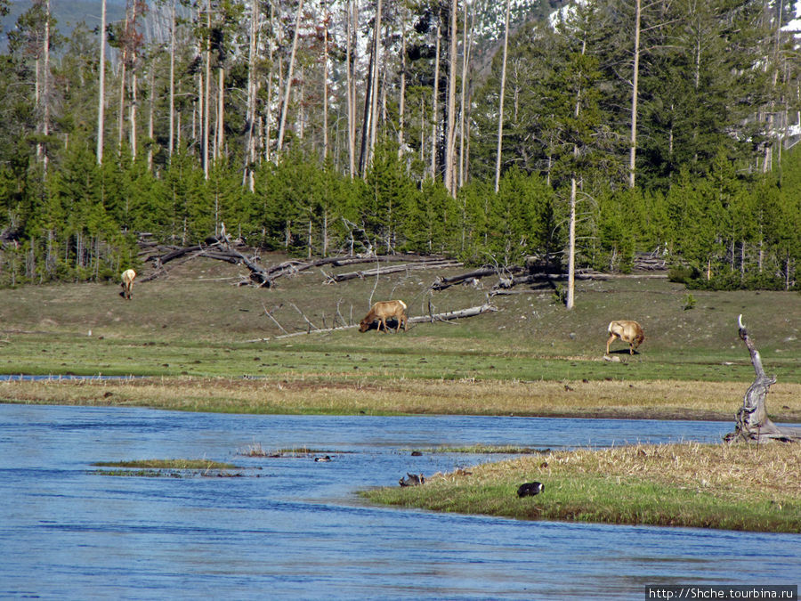 Ну а потом, опять на другом берегу увидали сперва лосей