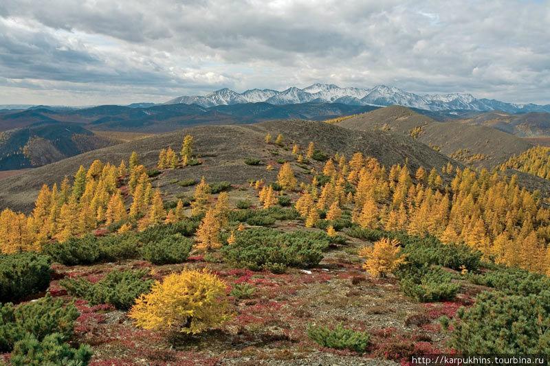 Осень на севере самое благодатное время для фотографа. Краски настолько выразительны и контрастны, что не верится в их реальность, сюжетов несметное множество. Но это время здесь быстротечно. Ударят ночные морозы, и ярко-жёлтая лиственница поблекнет, станет коричневой, а потом и осыплется.