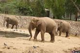 Слон улыбается