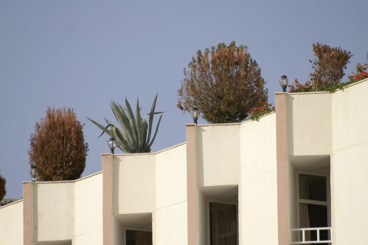 Оранжерея на крыше