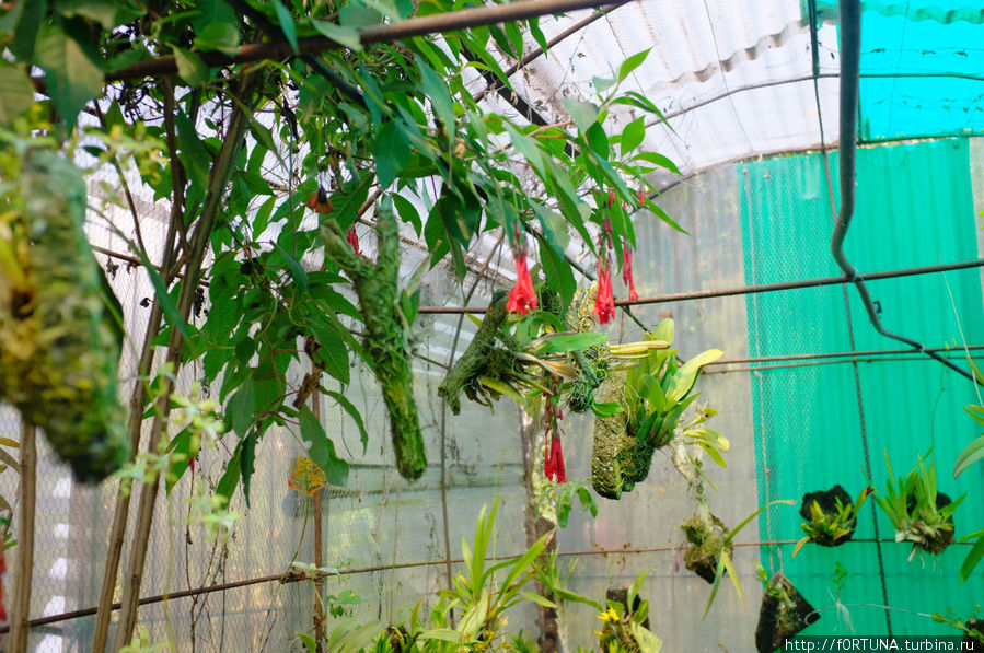 Теплица с орхидеями