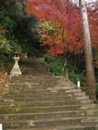 Первые фото сделаны вечером. Момидзи уже начали сбрасывать листву. Начало подъёма к входу в храм со стороны дороги.