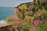 не знаю, как называются эти замечательные лиловые пушистики, но их в это время года (июнь) на побережье очень много... лило-лила-лило-лила-лило-лила-лилэ...