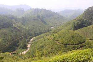 Чайные холмы, а внизу дорога
