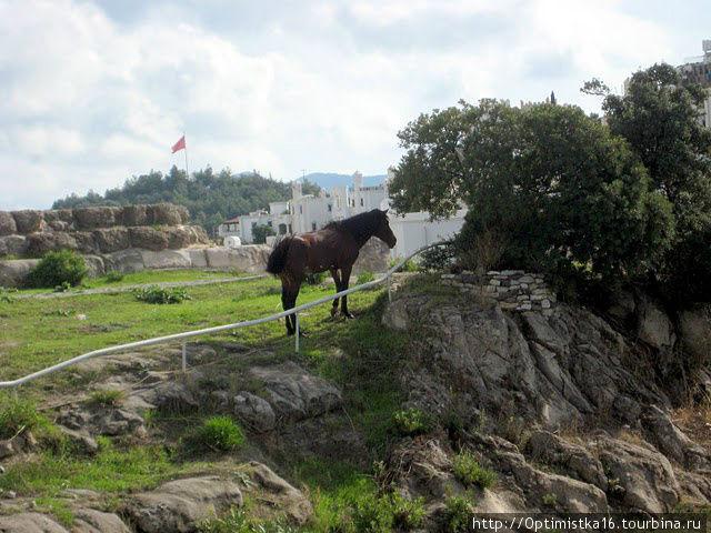 А рядом — лошадка.