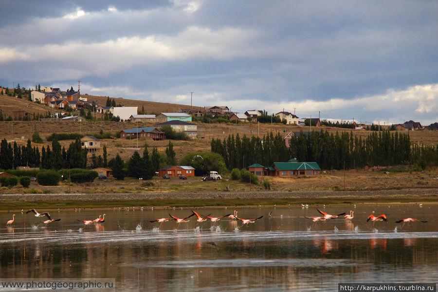 Ещё шаг и прекрасные розовые птицы поднялись в воздух. Так и не удалось сделать крупный план своим двухсотником.