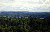 Вдалеке виднеются купола Псково-Печерского монастыря