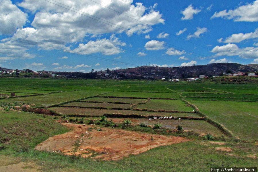 Здесь свернули на окружную, весь город оказался справа за огромными рисовыми полями