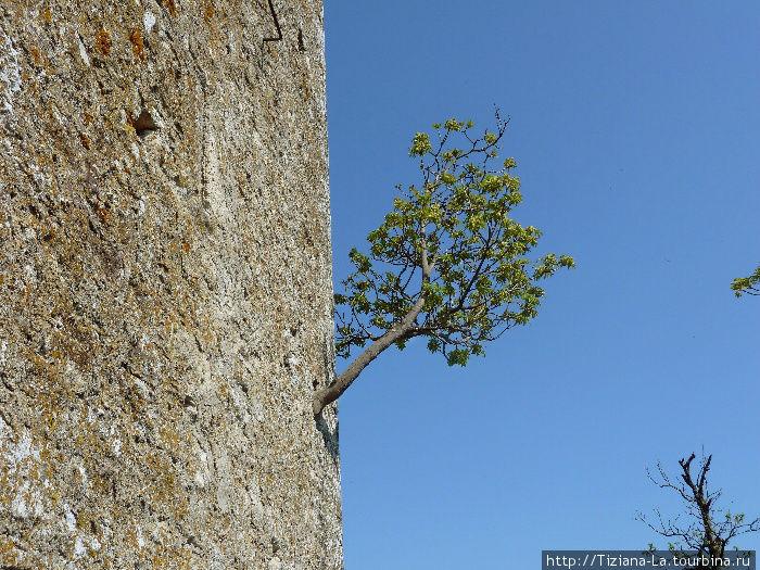 Деревце проросло в руинах
