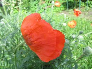 И обязательно, немного цветов, растущих на участках местных жителей и сфотографированных после дождя