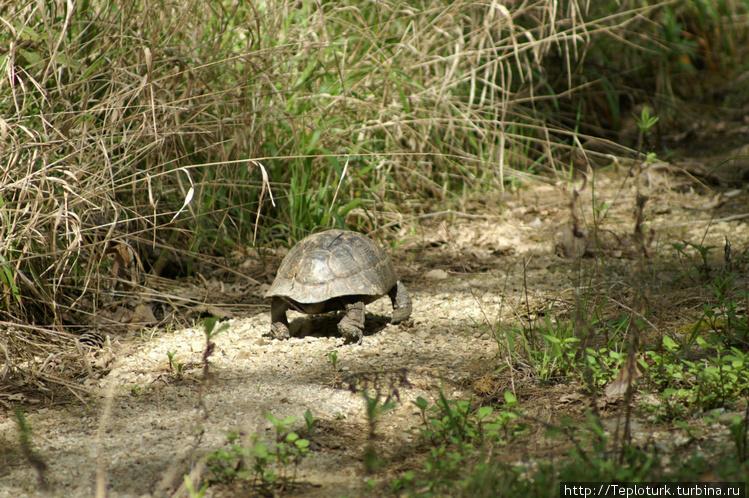 Шустрая черепаха