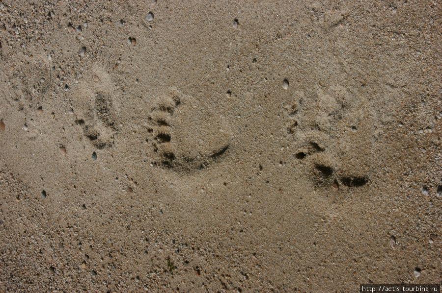 Миша был здесь.