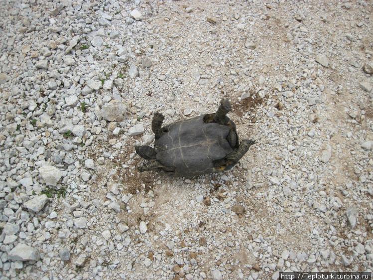 Черепаха в затруднительно