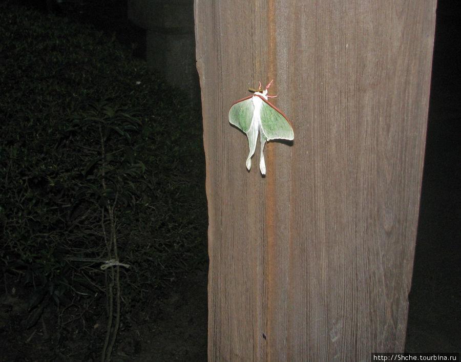 А на столбе нашли ночную бабочку, но друзья не разрешили мне ее взять себе на память в коллекцию (а меня дома почти 200 штук), говорят, на территории храма она как бы под охраной духов, ну или как-то в этом роде...