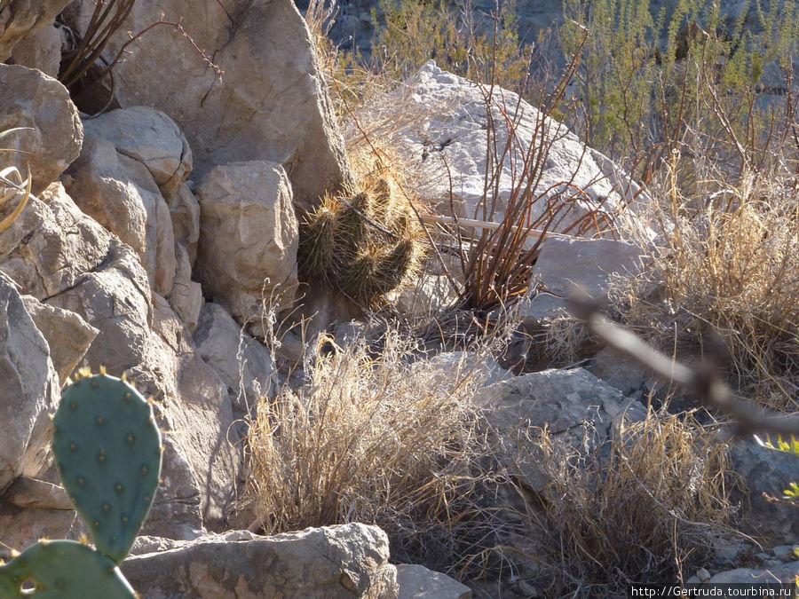 Еще кактусы в расщелине скалы