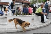 Все бездомные животные поставлены на учет, на уши вешают бирку.