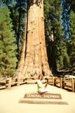 А вот и оно — Генерал Шерман — самое известное и самое высокое дерево в парке . Это получается, что самое высокое дерево на планете, не так ли?
